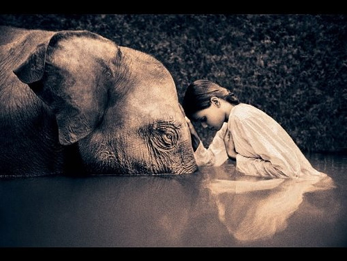 elephant-girl-ashes-and-snow.jpg